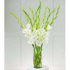 White Gladiolus with Vase