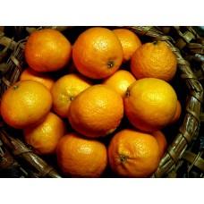 Orange(4kg)