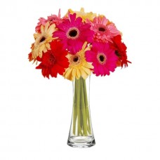 8 Mixed Gerberas