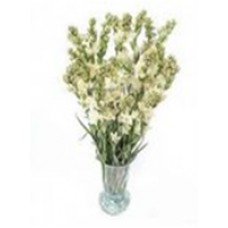 long stream Tuberoses  in a vase for valentine(20 pcs)